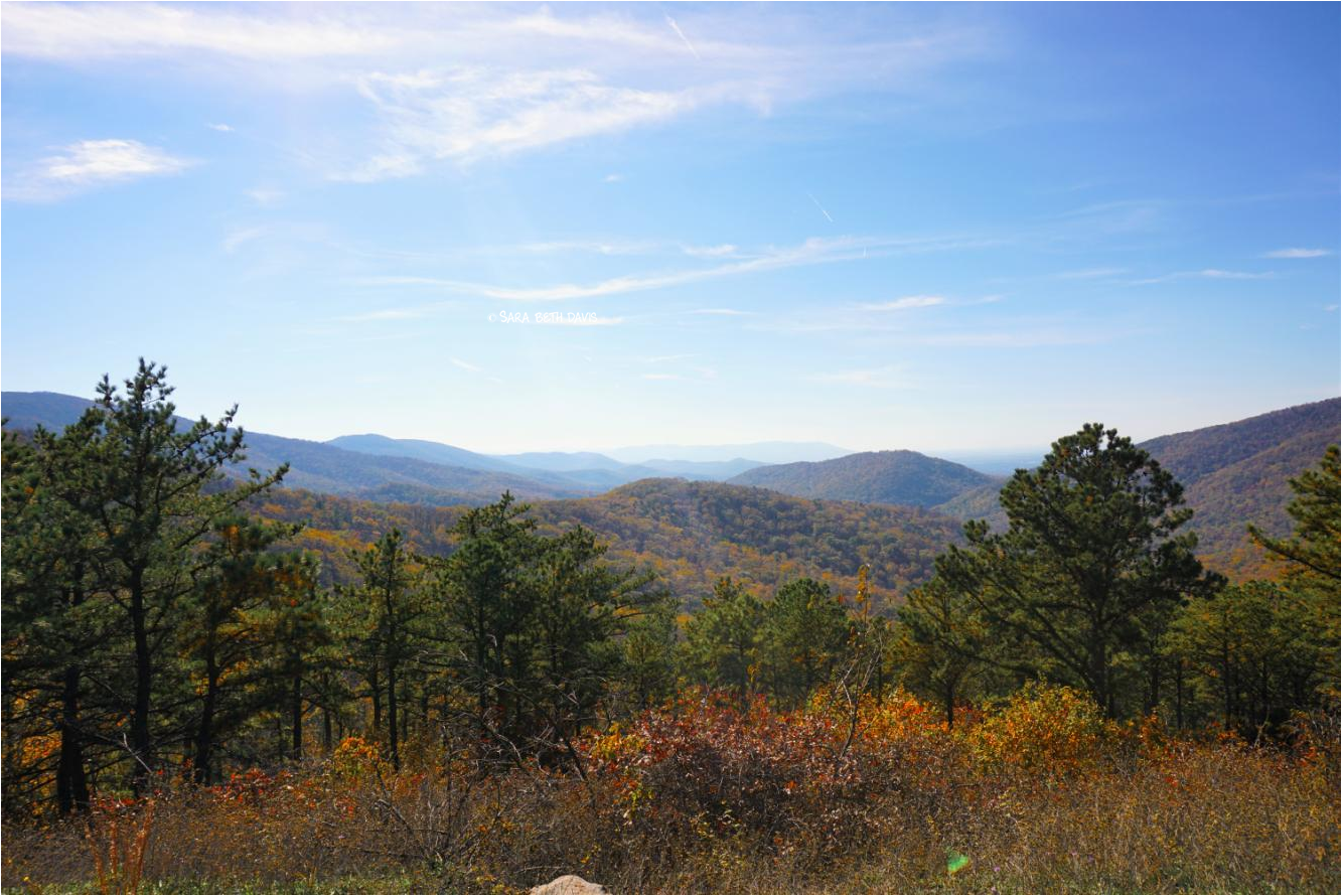 Shenandoah National Park Fall Foliage