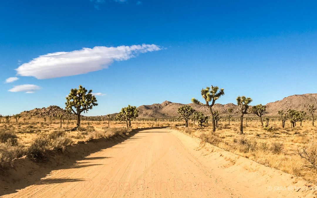 How Twitter Helped Me Plan My Surprise Trip to Joshua Tree National Park in a Few Hours